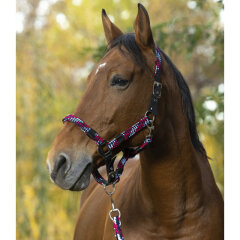 Equithéme - Braid cob